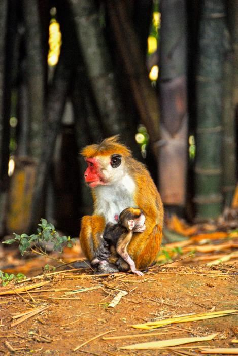 alex Alexs Alex's Cycle A family of monkeys