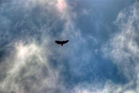 Bird flying high in the sky