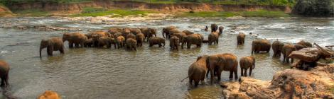 alex Alexs Alex's Cycle A herd of Sri Lankan Elephants Alexs cycle alex