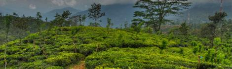 alex Alexs Alex's Cycle Tea plantations in the mountainous areas sri lanka