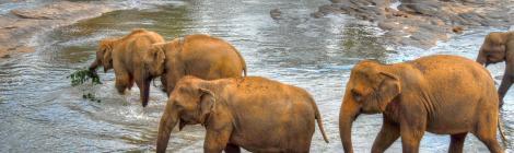 alex Alexs Alex's Cycle elephants feeding herd sri lanka