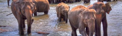 alex Alexs Alex's Cycle Elephants in Sri Lanka