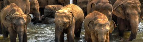 alex Alexs Alex's Cycle A parade of Elephants in Sri Lanka