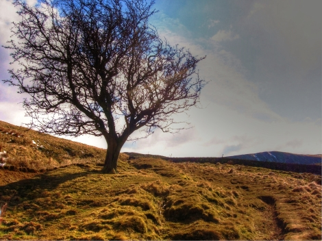 Spring has arrived, taken on a small Nikon compact whilst hiking in the Pennines